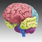 3d-brain app